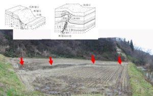 第四紀断層の地表踏査